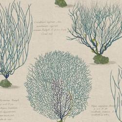 Conchas Turquoise Blue Sea Shell Wallpaper