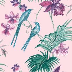 Honolulu Silver Palm